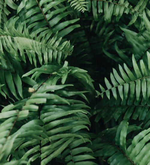 shinrin-yoku | bosbaden | helende natuur | 7