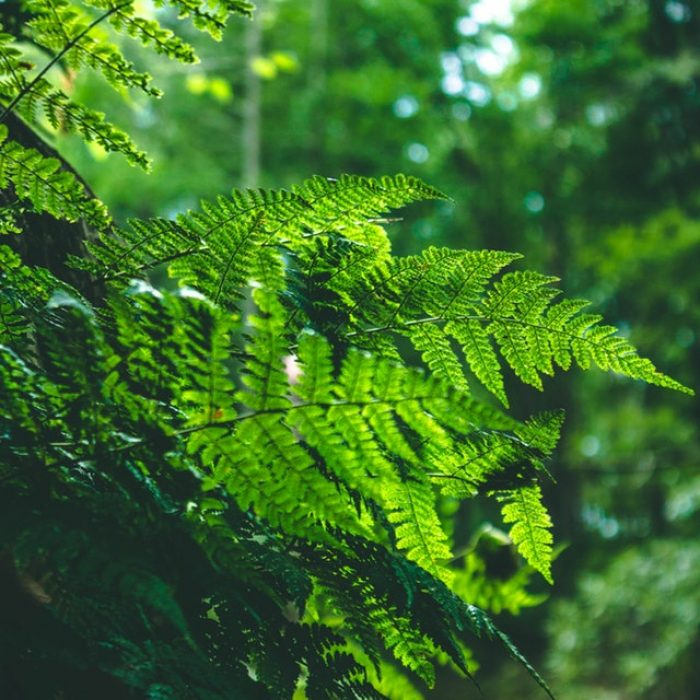 shinrin-yoku   bosbaden   helende natuur   5