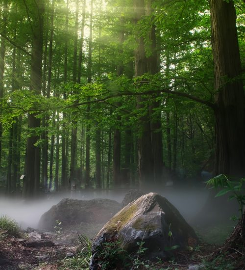 shinrin-yoku   bosbaden   helende natuur   2