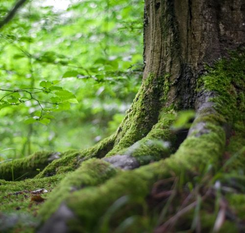 shinrin-yoku | bosbaden | helende natuur | 3