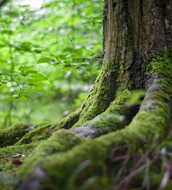 environment-forest-grass-142497 (1) (Medium)