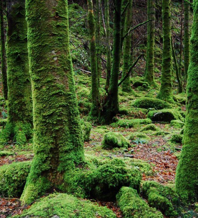 environment-forest-green-141233 (1) (Medium)